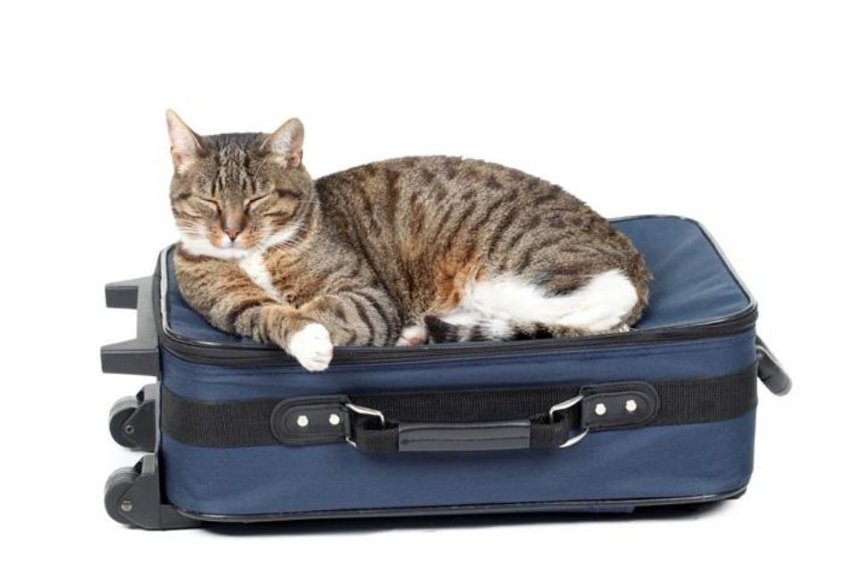 nashi domashnie pitomczy Как перевезти домашнее животное в Испанию? Требования