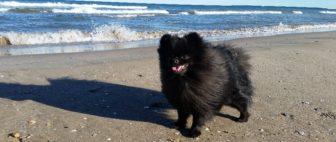 Как перевезти домашнее животное в Испанию? Требования