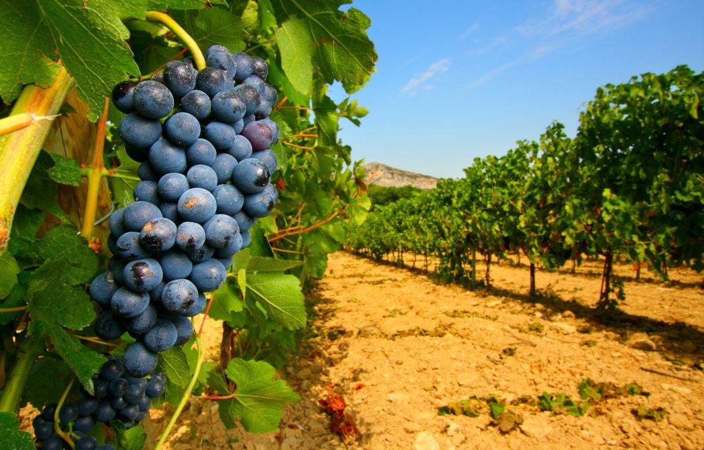 vinogradniki ispanii Испанское вино и виноградники